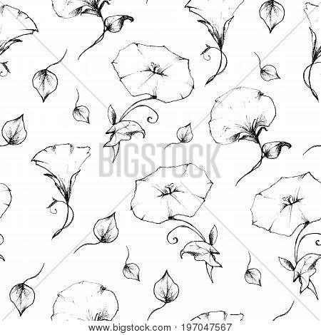 Seamless pattern of convolvulus retro vintage. Vector illustration.