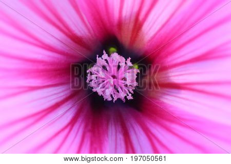 Colorful Flower Macro Shot