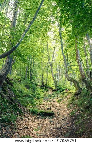 Magical woods in the morning sun. Fairy forest road in summer. Dramatic scene and picturesque picture. Wonderful natural background. Location place Carpathians, Ukraine. Explore the world's beauty.
