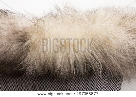 The fur of a Arctic,  polar fox Fox. Texture. Stock photo Top view. Close-up.