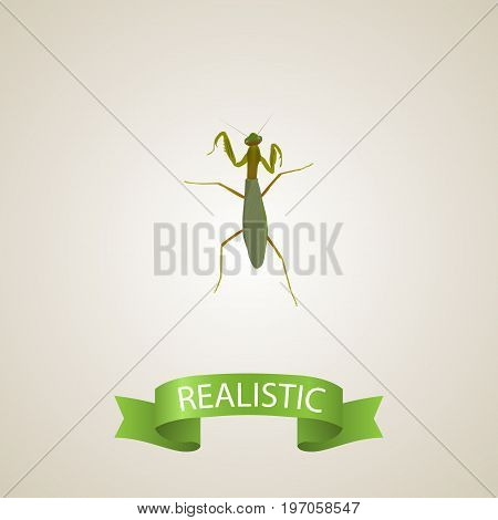 Realistic Mantis Element. Vector Illustration Of Realistic Grasshopper Isolated On Clean Background