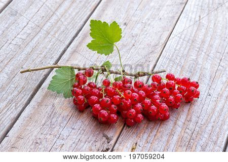 Fresh picked red currant berries on wodden background