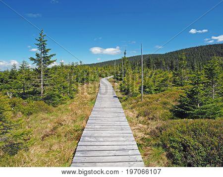 Wooden Plank Footpath In Jeseniky Mountain National Park In Spruce Tree Forest In Czech Republic