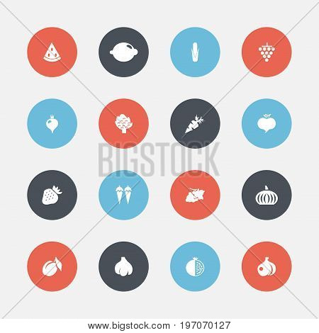 Set Of 16 Editable Berry Icons. Includes Symbols Such As Turnip, Bunch Of Flowers, Muskmelon And More
