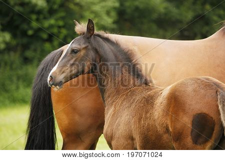 Foal Next To Mare