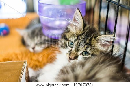 Portrait Of One Tabby Tiny Kitten In Cage Waiting For Adoption