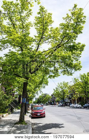 Montreal Canada - May 28 2017: Saint Denis street sidewalk and parking with car and tall green tree in Plateau neighborhood in city in Quebec region
