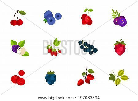 Wild and cultivated berries icon set. Cherry Blueberry Cowberry Acai Mulberry Goji Currant Raspberry Cranberry Ripe raspberry Dogrose berry Gooseberry