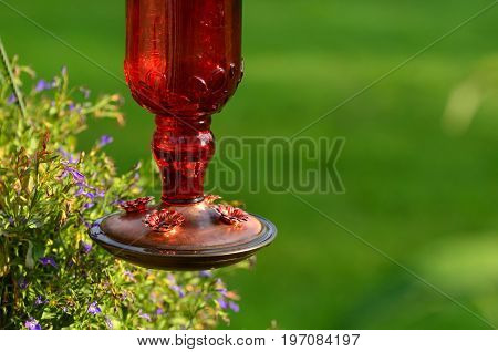 Red Hummingbird feeder with green background copy space