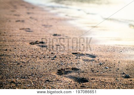 Traces on the beach