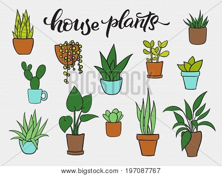 Set vector of houseplants in pots. Hand drawn cartoon collection of house plants. Lettering house plants. Vector illustration
