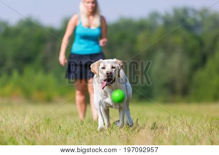 Mature Woman Plays With A Labrador Outdoors