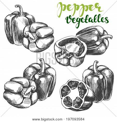 peppers bell vegetable set hand drawn vector illustration realistic sketch