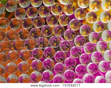 Photo image of flowers refracted, and reflected 5