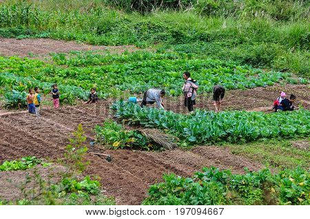 LUANG NAM THA, LAOS - DECEMBER 31, 2012: LaoTian family working on the field in the village Luang Nam Tha Northern Laos