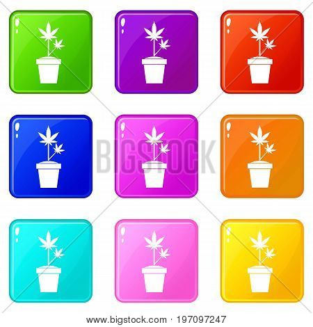 Hemp in pot icons of 9 color set isolated vector illustration