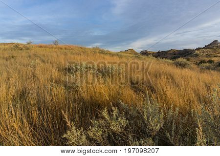 Dramatic lighting on golden grasses in Theodore Roosevelt National Park
