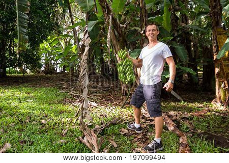 Young male expat living in tropical Costa Rica harvesting bananas