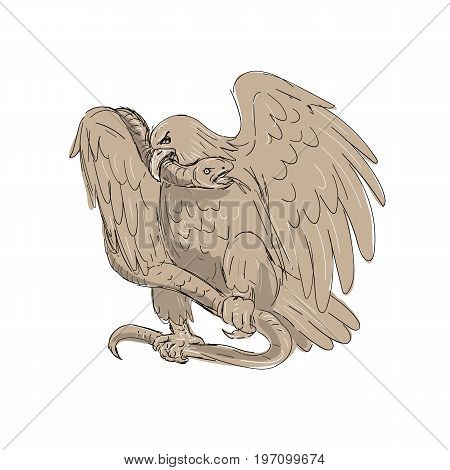 Illustration of a serpent in the clutches of an eagle with it's beak on snake's head done in drawing sketch style.