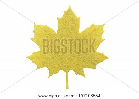 Ornamental isolated maple leaf close-up for collection or installation top view. flat