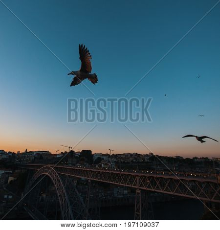 Seagull on the background of Dom Luis I bridge at dusk, Porto, Portugal.