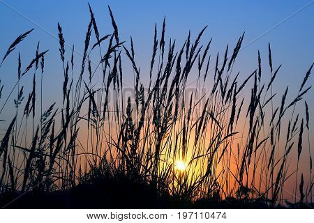 silhouette of grass in a field at sunset