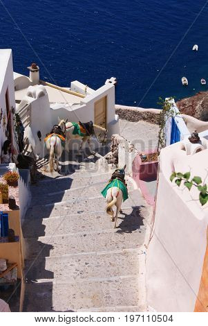 three colorful covered donkeys are going down the stairs in a small street on Santorini in the background blue sea on the sides typical white houses with blue and orange details.