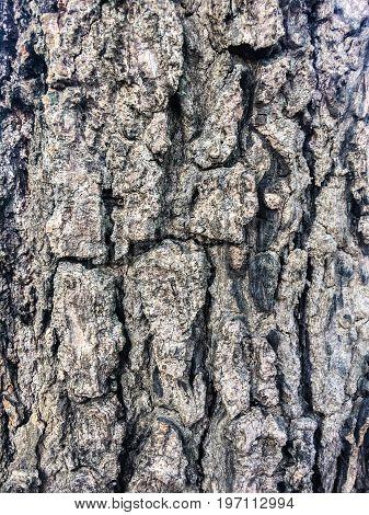 Tree bark texture background,Wood Textures,Texture of the bark of tamarind tree background.