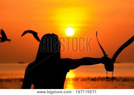 Silhouette of a girl feeding birds at the seacoast in twilight sunset background