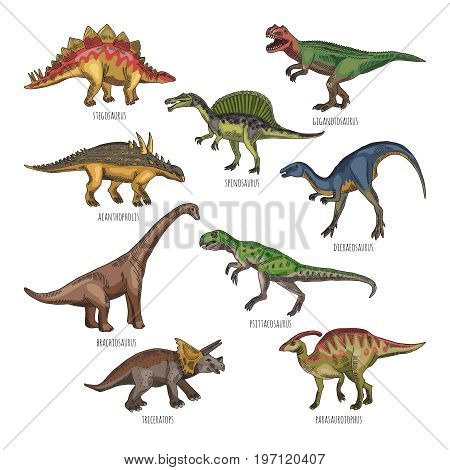 Colored illustrations of different dinosaurs types. Tyrannosaurus, rex and stegosaurus. Historical dinosaur character dicraeosaurus and spinosaurus illustration