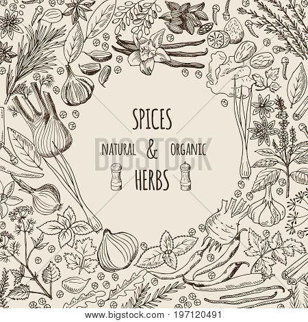 Healthy background illustrations with spices and herbs. Hand drawn pictures with place for your text. Healthy spice and plant, herb rosemary natural