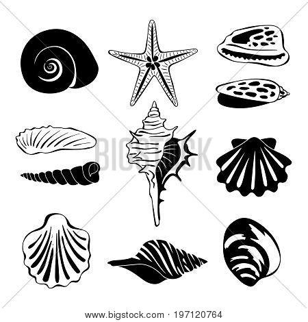 Black monochrome illustration of marine shells. Vector silhouette isolate. Seashell exotic souvenir, spiral maritime shells