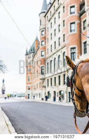 Quebec City, Canada - May 29, 2017: Old Town Street With View Of Hotel Chateau Frontenac And Horse B