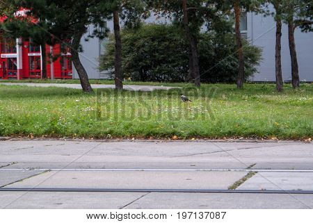 outdoor image of small park background for graphic design.