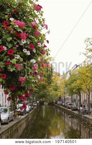 Flowers on canal in Amsterdam, Amstel river, Holland, Netherlands, wide angle