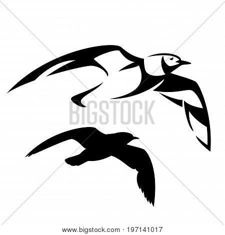 flying seagull vector design - black and white bird outline and silhouette