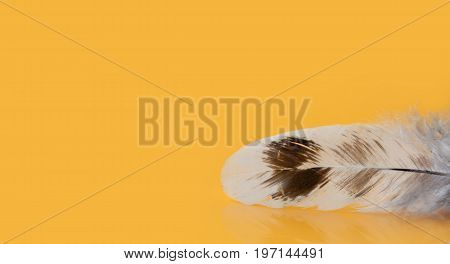 Colorful feather textured macro view photo. Beautiful chicken bird plumage pattern on yellow background. Shallow depth of field selective focus. Copy space