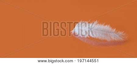 Fluffy white feather texture macro view. Luxury softness concept. Bird plumage feathering on orange background. Shallow depth of field, soft focus. copy space.