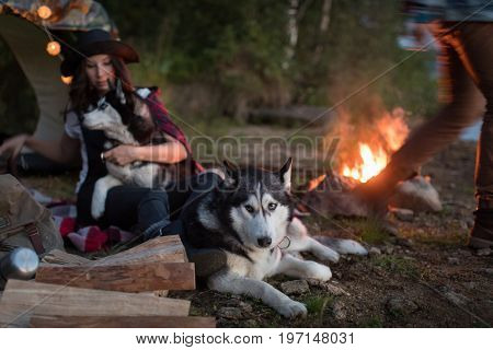 The Husky dog sits with the hosts and another Husky dog near fire on nature.