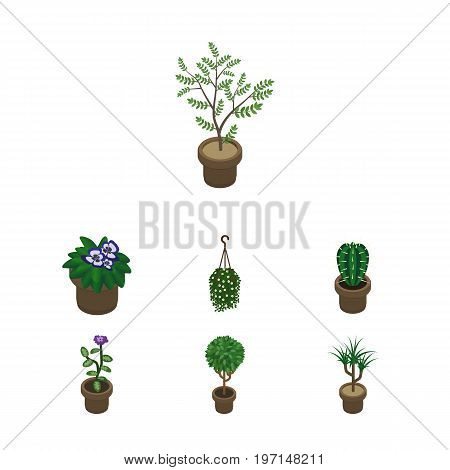 Isometric Houseplant Set Of Houseplant, Peyote, Tree And Other Vector Objects