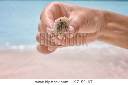 Hand of young woman holding hermit crab at sea resort, closeup. Summer vacation concept
