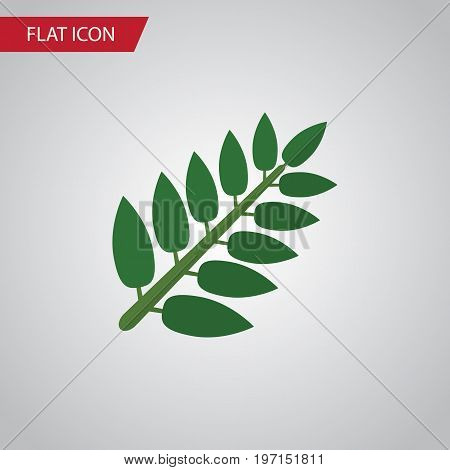 Acacia Leaf Vector Element Can Be Used For Acacia, Leaf, Leaves Design Concept.  Isolated Leaves Flat Icon.