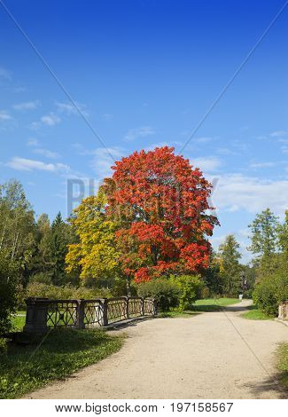 Autumn tree with bright foliage on a blue sky background