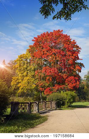 bright autumn maple Landscape in a sunny day