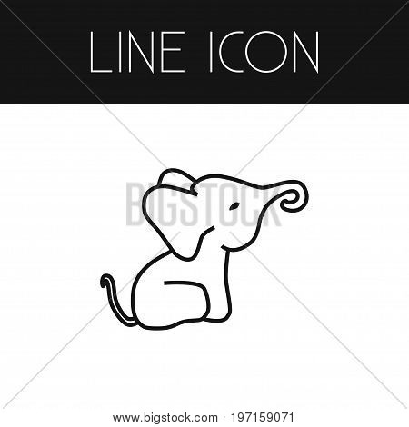 Proboscis Vector Element Can Be Used For Elephant, Trunked, Proboscis Design Concept.  Isolated Elephant Outline.