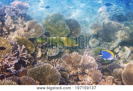 Fishes in corals . Underwater world .