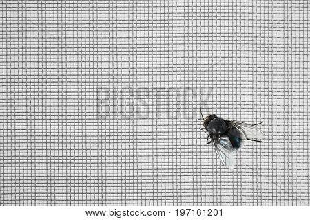 Annoying fly on window screen