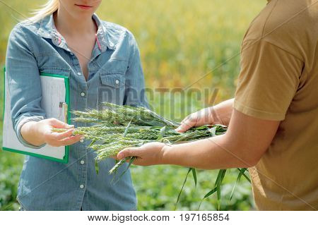 Couple of agronomist negotiating about future harvest of wheat at the wheat field