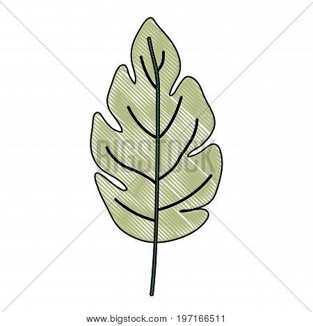 crayon silhouette of green light color of lobed leaf plant vector illustration