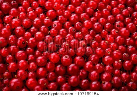 Close-up picture of a fresh and bright red currant as a background. Top view of red currants on a dark brown wooden background. Organic berries. Summer fruits. Fresh and ripe berries as a texture.